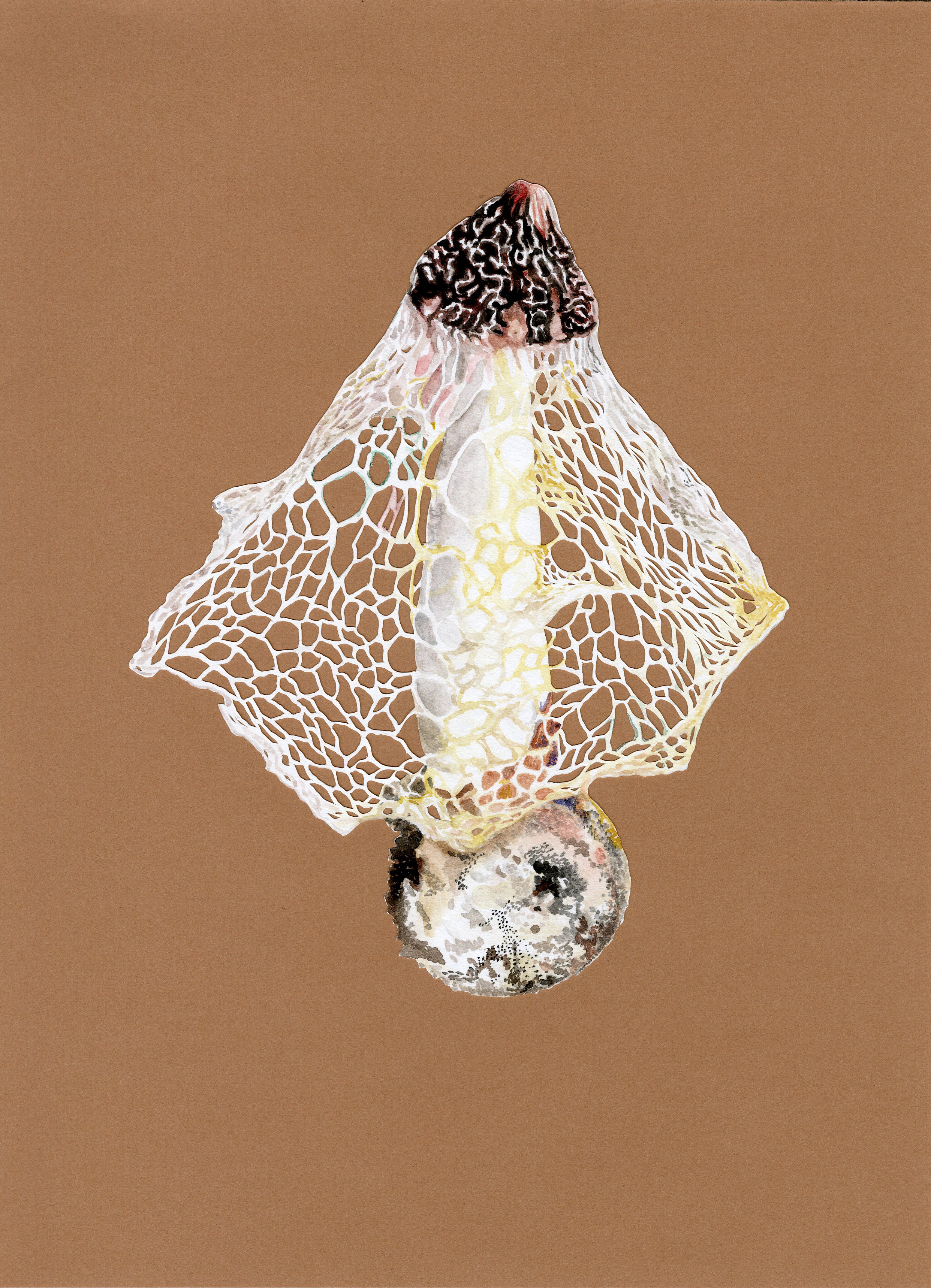 Veiled Stinkhorn