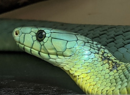 50 People Will Be Bitten by A Snake Whilst You Read This Blog:
