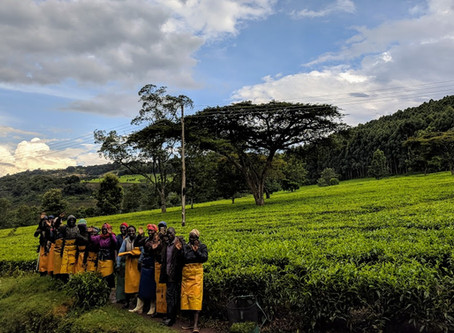 Hailstorms, Tea Plantations and the Next Generation of Elite Kenyan Athletes.