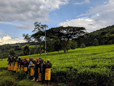 Hailstorms, Tea Plantations and the Next Generation of Elite Kenyan Athletes.