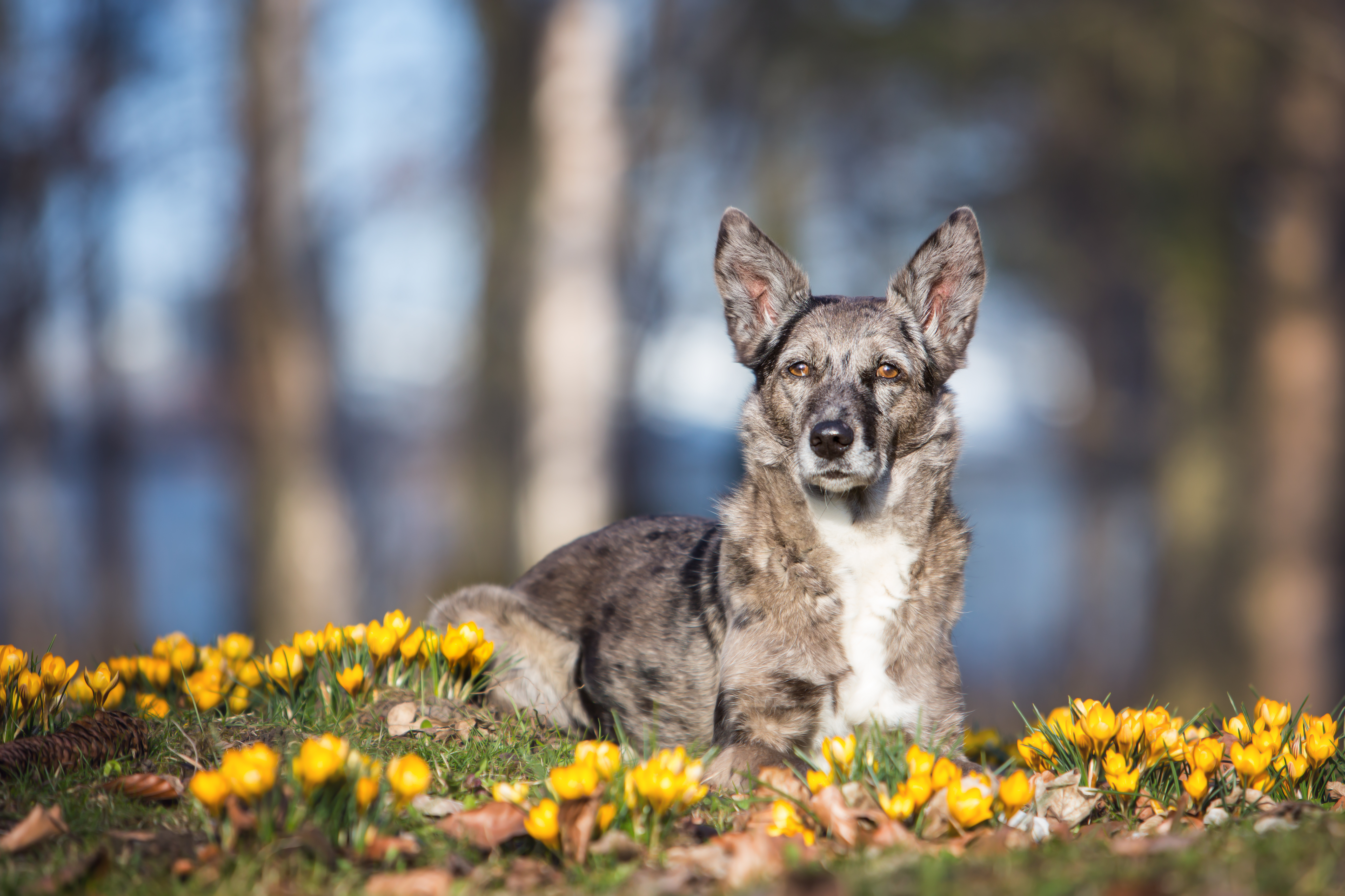FotoShooting Tiere