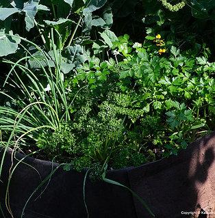XXL Root Pouch - Garden Bed