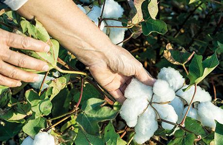 ecologia algodao organico textil brindes