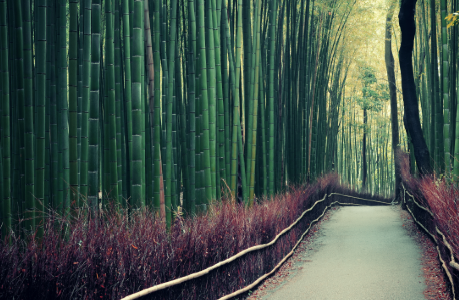 bamboo, ecologia reciclagem brindes eco