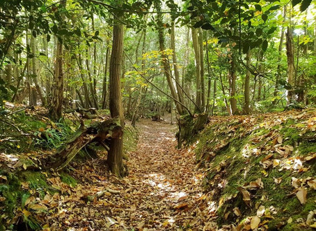 Exploring The High Weald Woodlands at Guestling