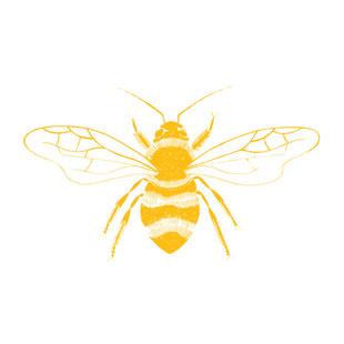 YELLOW BEE-01.png