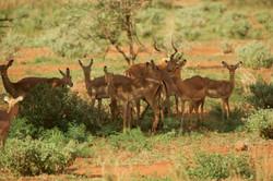 Kenya23