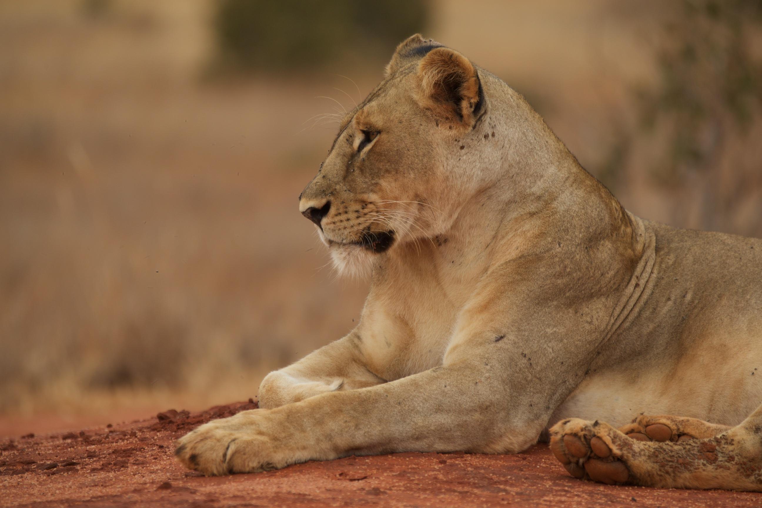 Kenya151