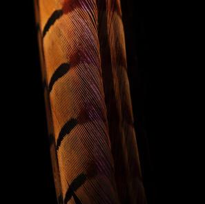 Snake 40x60