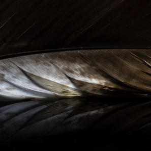 aigle 40x60