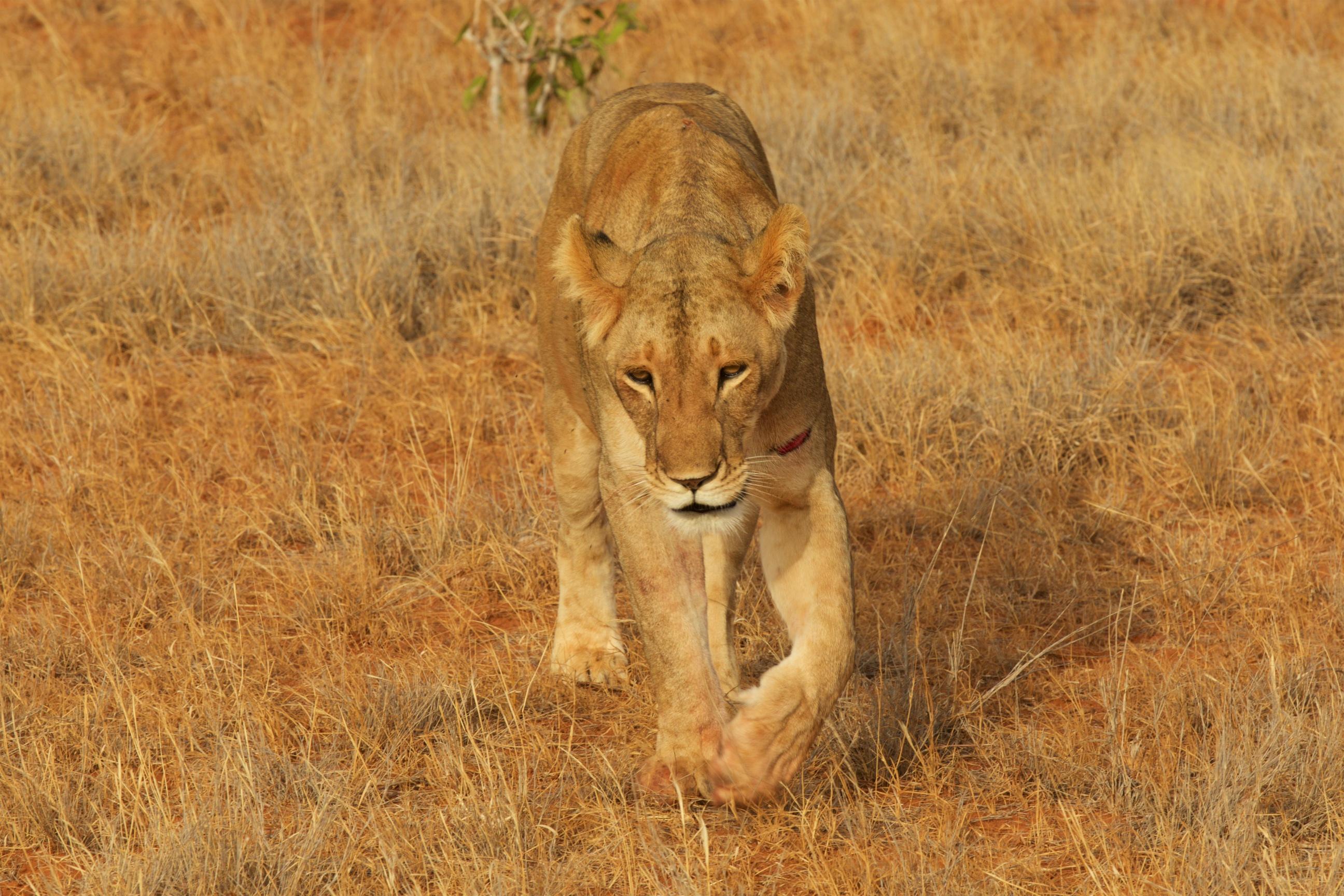Kenya154