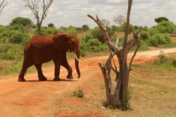 Kenya118