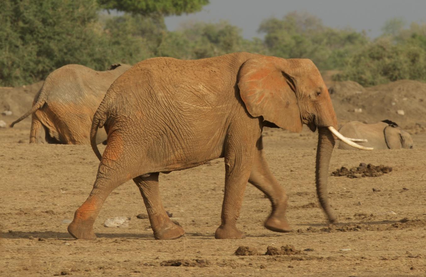 Kenya167