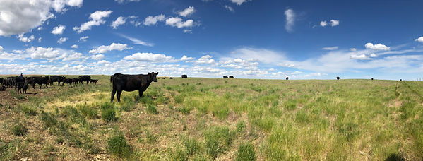 grazing.JPEG