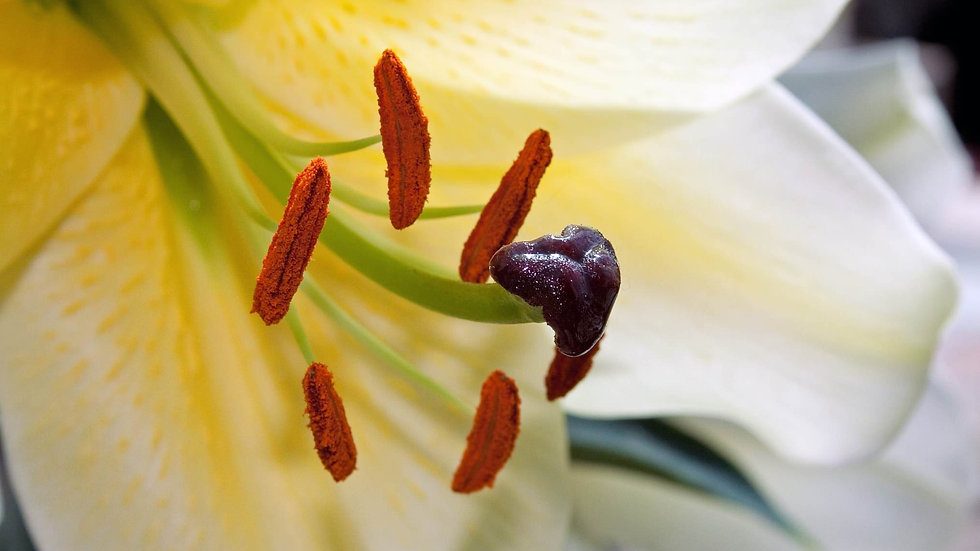Inside Lily