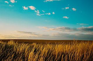 Canva - Rice Grain Grass Field.jpg