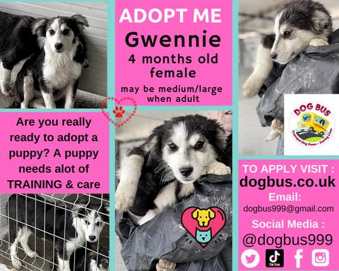 Gwennie  adopt me.png