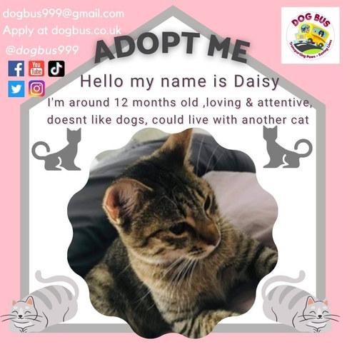 daisy post.jpg