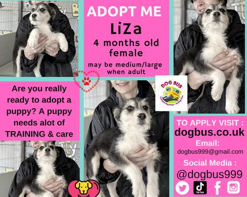 liza adopt me.png