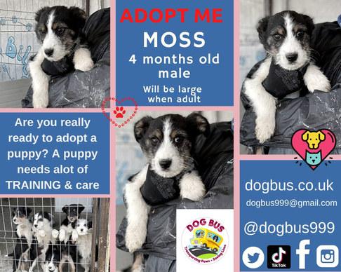 MOSS adopt me.jpg