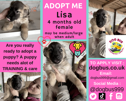 Lisa adopt me.png