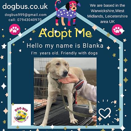 Blanka adopt me.png