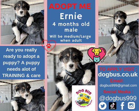 Ernie adopt me.png