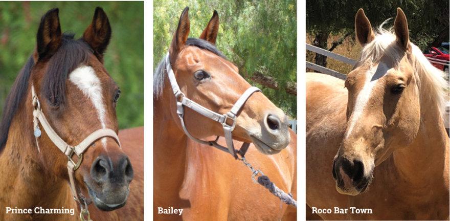 rtf_horses.jpg