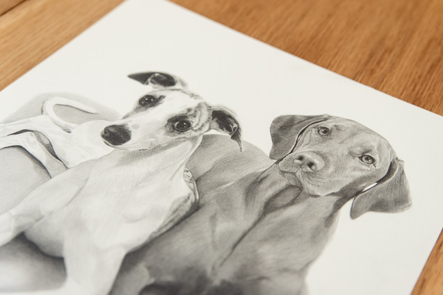 Vizsla and Whippit Pet Portrait