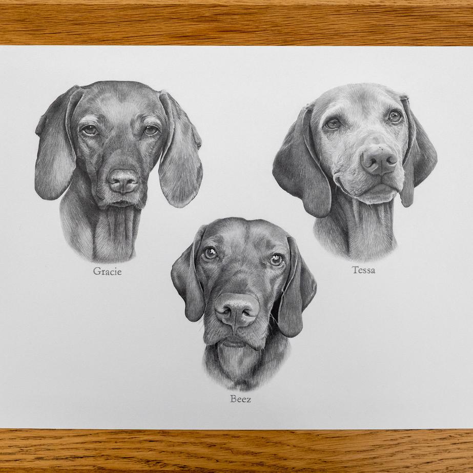 Tessa, Beez & Gracie