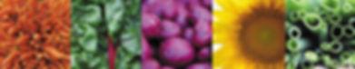 veggie fivesome_.jpg