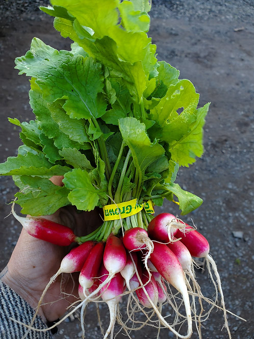 French Breakfast Radish, 1 Bunch