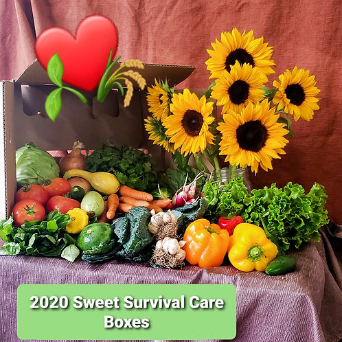 2020 Care Boxes, 1 box