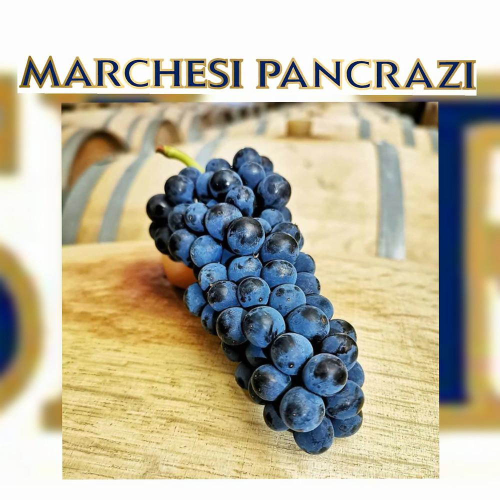Degustazioni 3 vini Pinot Nero del Marchese Pancrazi