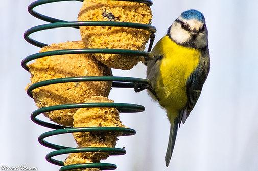 oiseaux9.jpg