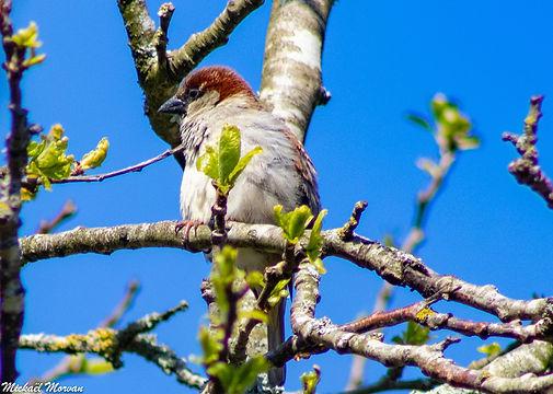 oiseaux8.jpg