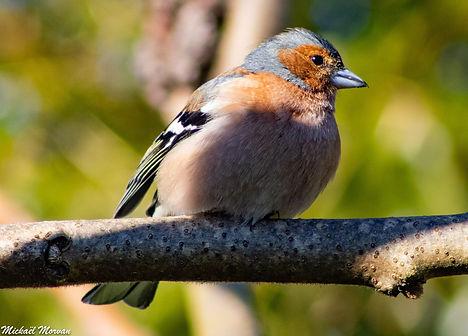 oiseaux7.jpg