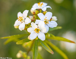 fleur4.jpg