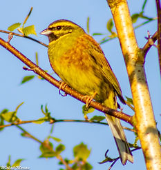 oiseaux5.jpg