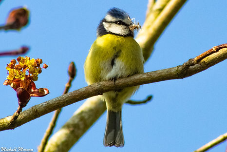oiseaux10.jpg