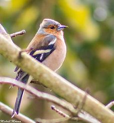 oiseaux2.jpg