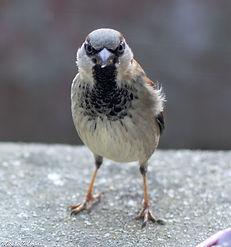 oiseaux12.jpg