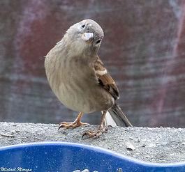 oiseaux11.jpg