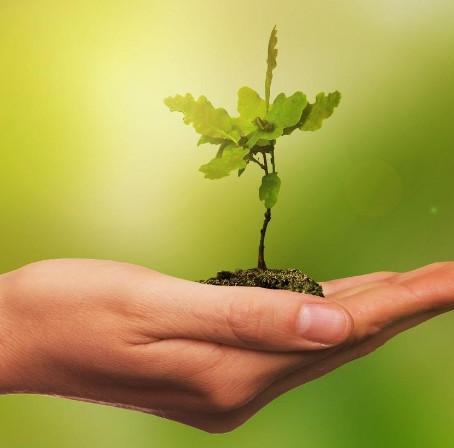 Dia mundial do meio ambiente: Como e por que surgiu?