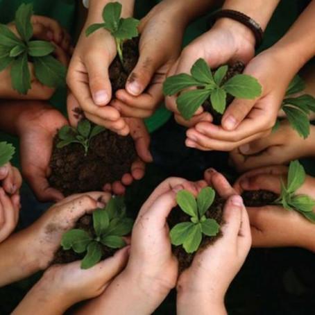10 dicas para começar a cuidar do meio ambiente, hoje!