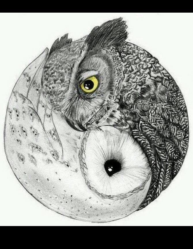 Owl_Yin.png