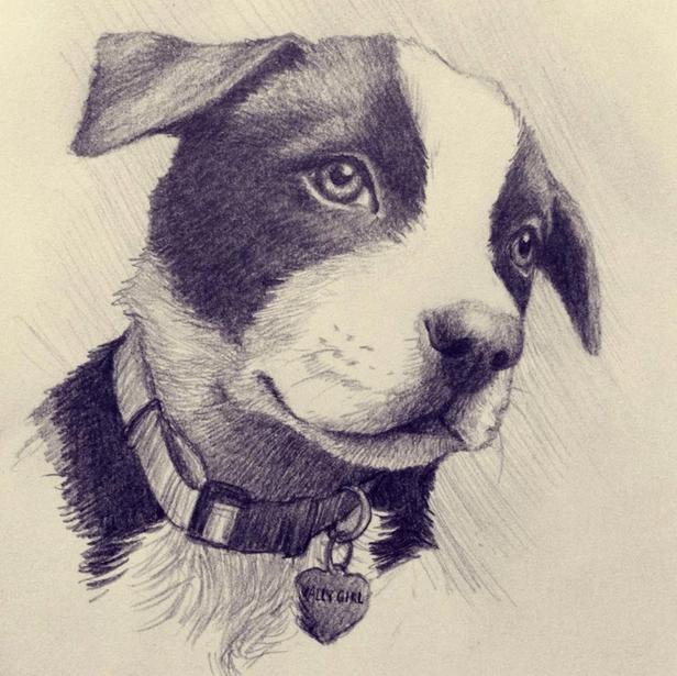 Valley Girl Puppy