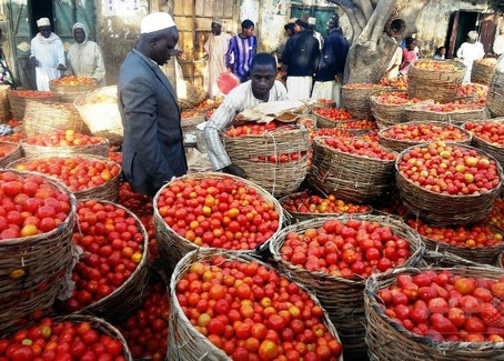 トマトのエボラ!?ある生物の大量発生でナイジェリア政府が非常事態宣言