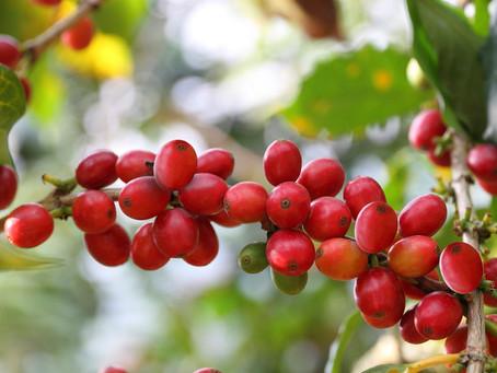 コーヒー豆について考えてみた