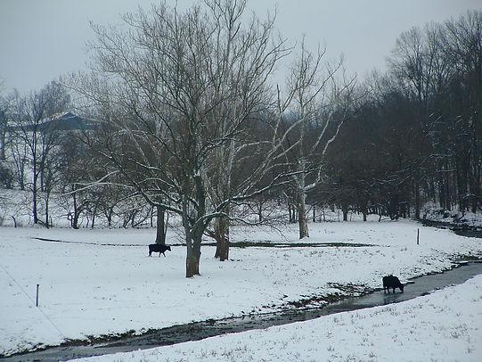 KimbRunsnow2003.jpg